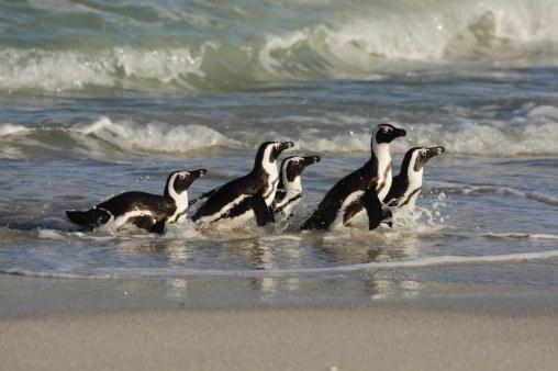 166774550_Boulders Penguins_1024x683