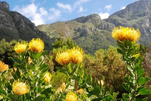 22067350_Kirstenbosch botanical garden_1024x686