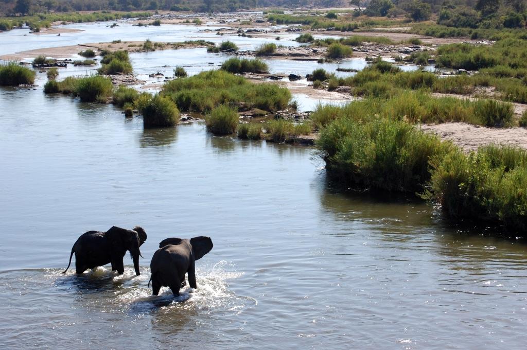 shutterstock_89185765_Elephants in River at Kruger