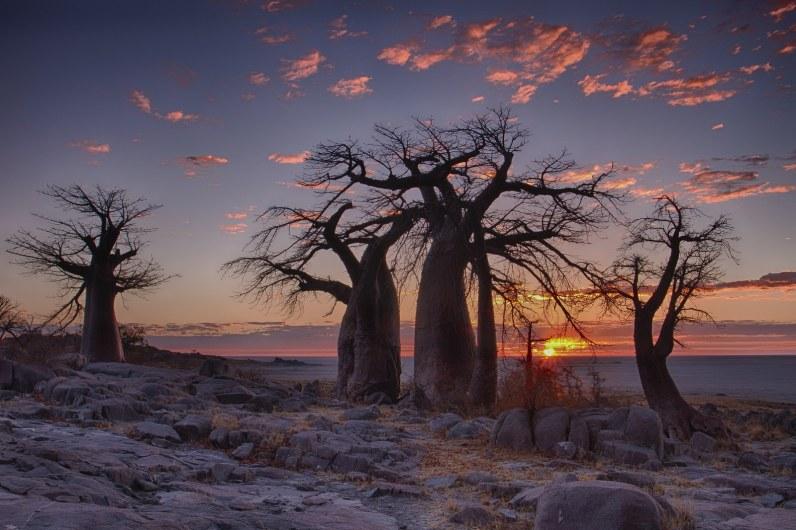 254390698_Botswana Baobab_1600x1067