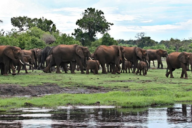 ss_4540030_Okavango Delta Elephants_1600x1067
