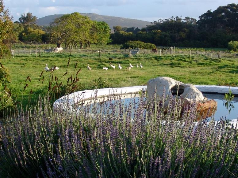 Cape Farmhouse 4