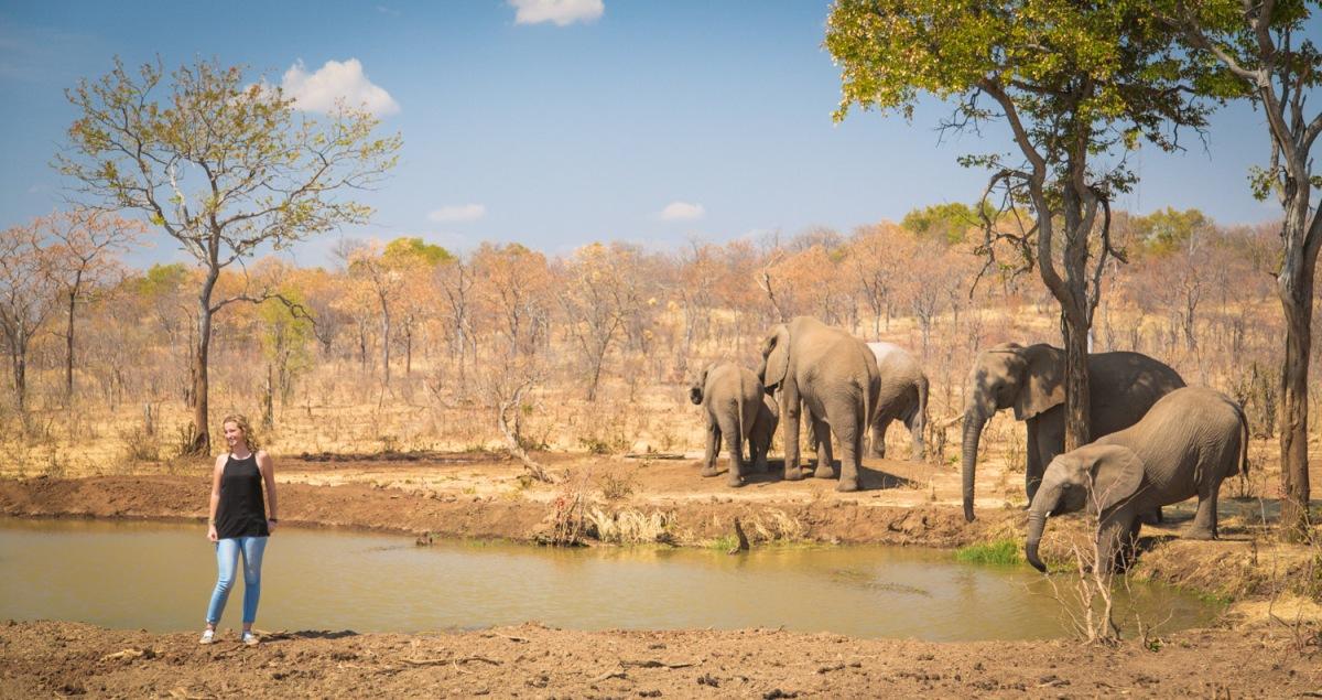 elephant-at-wallow