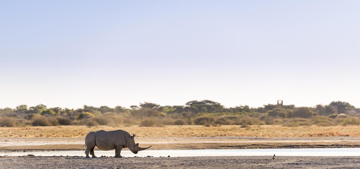 botswana-white-rhino_404383186