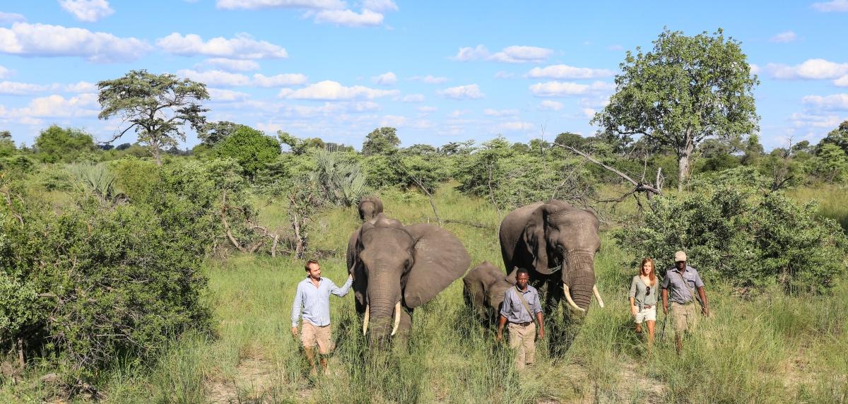 ABU CAMP, Okavango Delta, Botswana