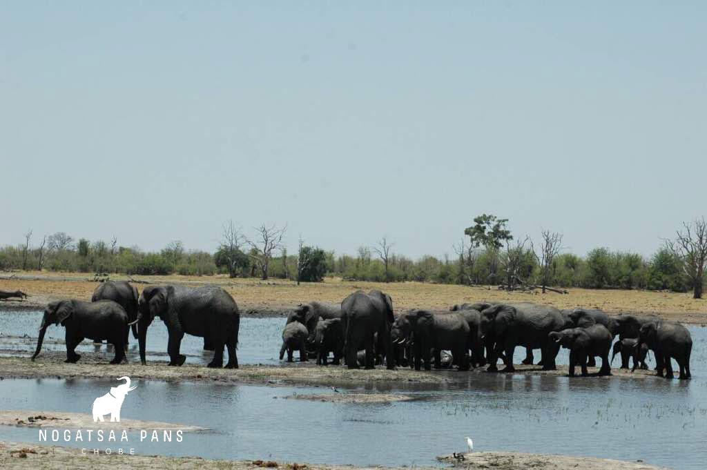 Elephants-Nogatsaa-3