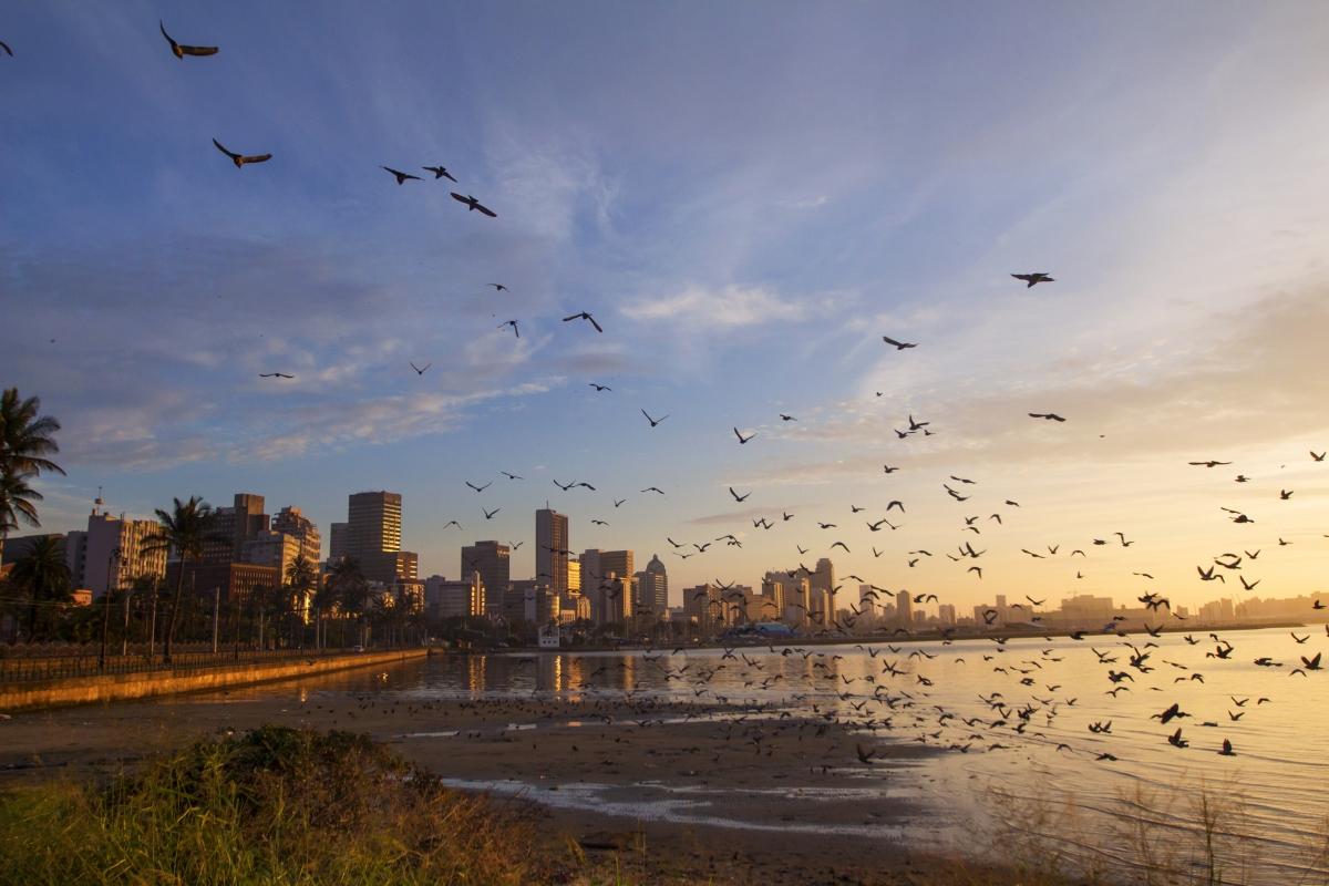 Durban ssimg_185.jpg