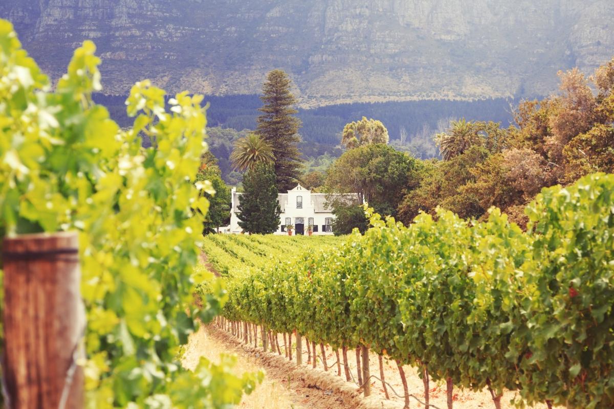 Stellenbosch-480982145.jpg