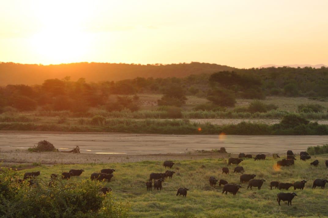 uMfolozi Big Five Reserve - Mthembu L (19)