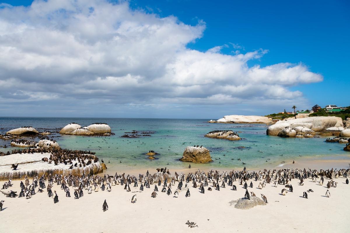 Boulders_Penguins-902051250.jpg