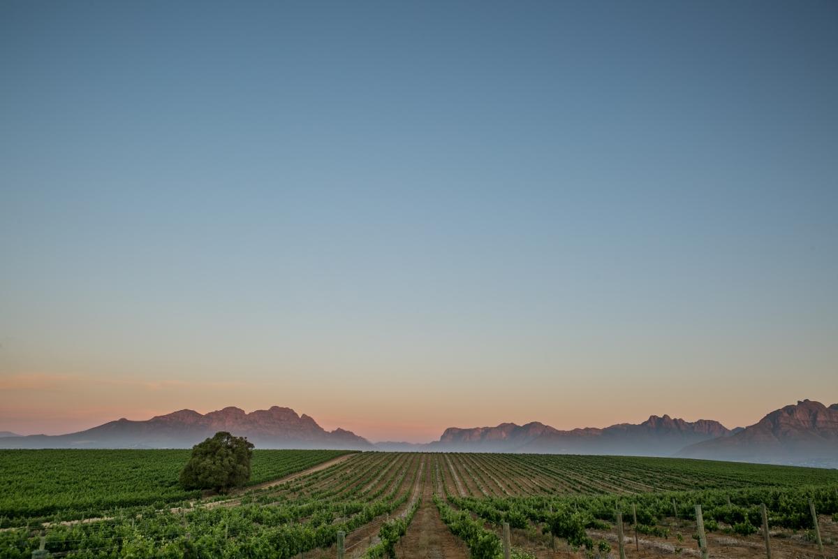 Cape Town Winelands-880477126(1).jpg