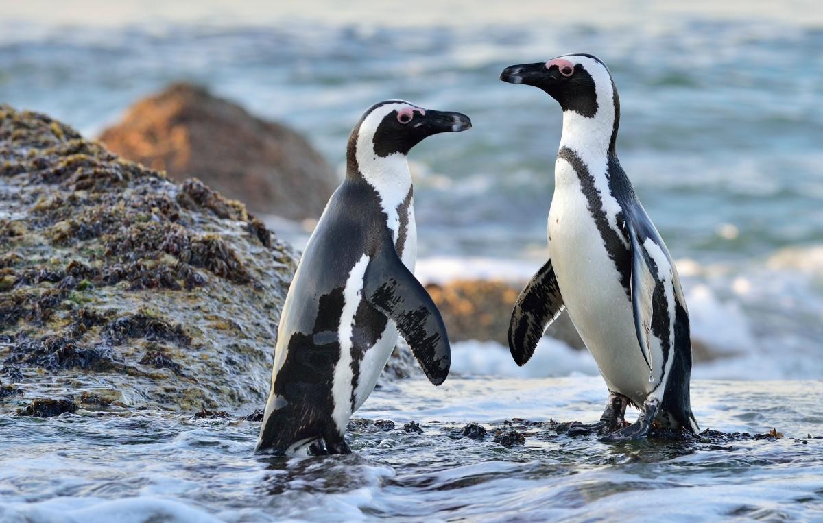 Penguins_Boulders-1058365494.jpg