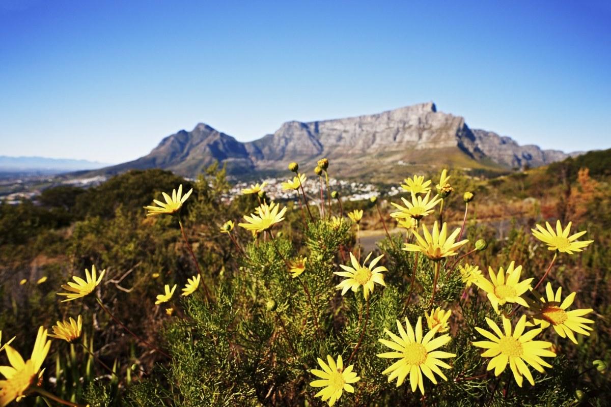 Cape Floral Kingdom-157639908_1600x1067.jpg
