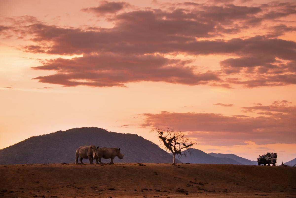 Kruger Rhino Game Drive ssimg_217