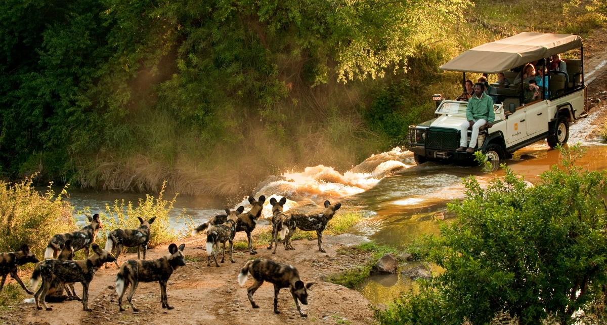 Morukuru Family Madikwe - African Wild Dogs and vehicle