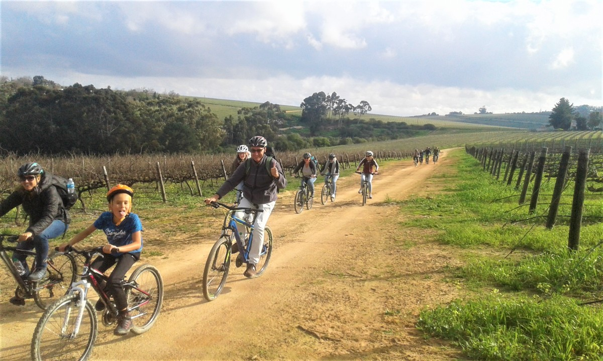 Winter cycling in the vineyards