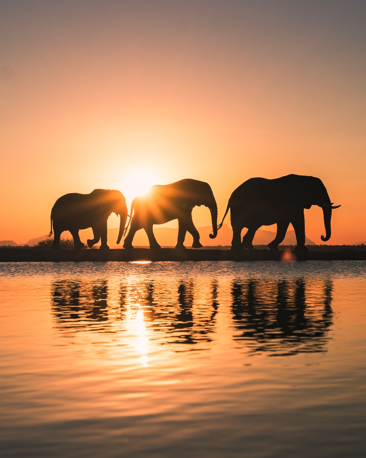 Jabulani-signature-sunset-elephants 2.jpg
