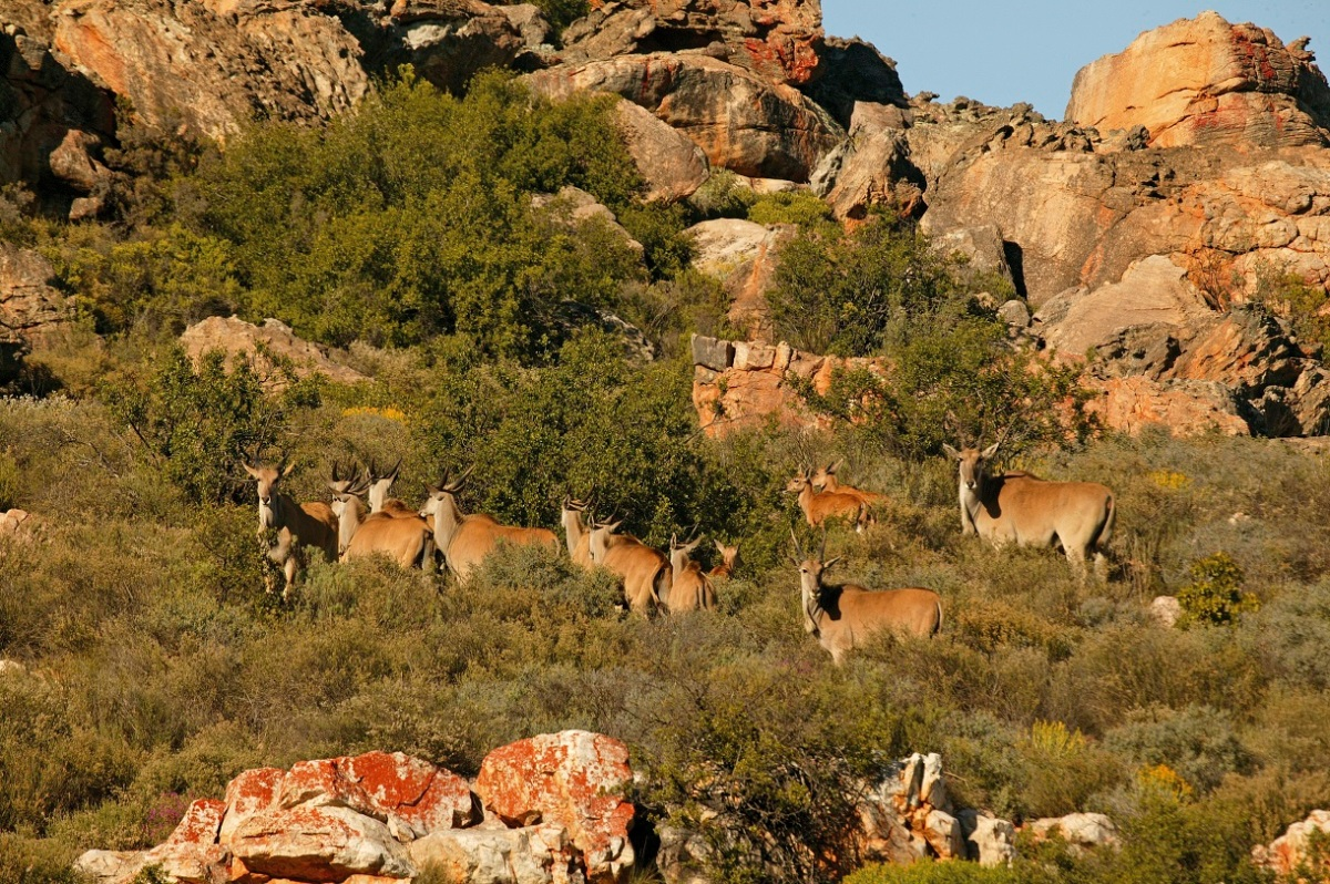 Bushmans Kloof Wildlife