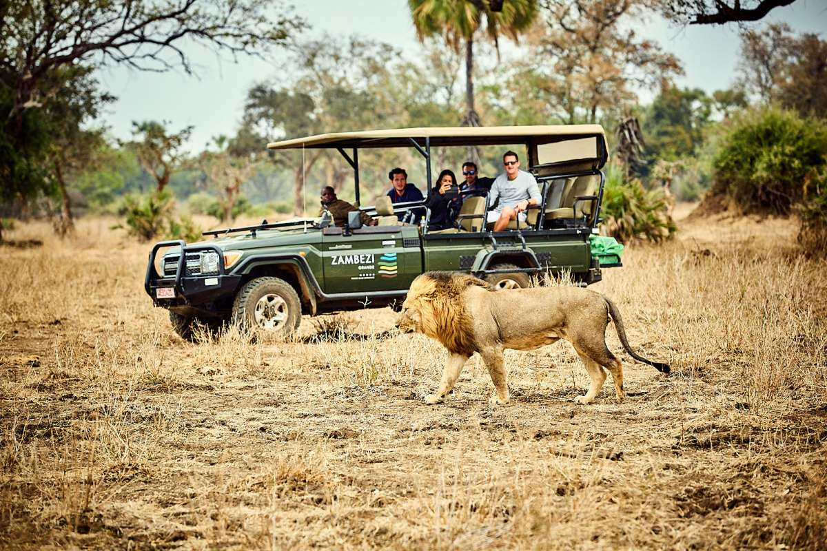 ZG - Activity - Game Drive Lion